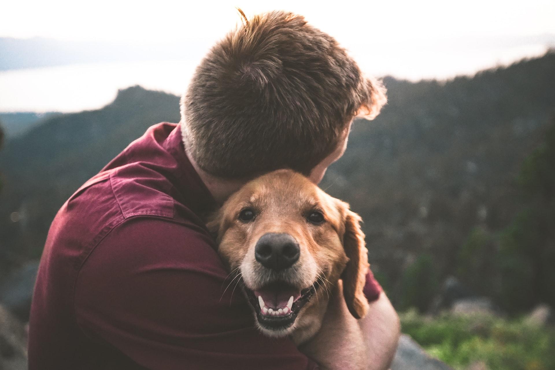 CBD as an alternative treatment for pets